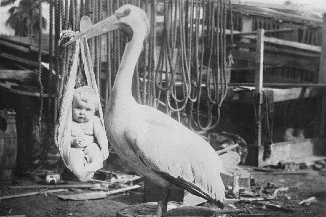 Ein Storch bringt ein Baby - ein Vintage Bild