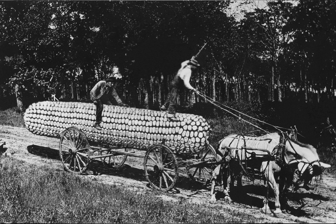 Ein Vintage Bild des größten Mais der Welt